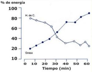 Consumo de Hidratos de Carbono y Grasas durante el ejercicio.